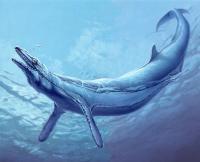 >Meeressäuger