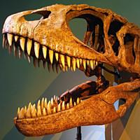 >Carcharodontosaurus