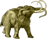 >Mammut, Nashorn