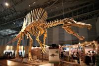 >Spinosaurus