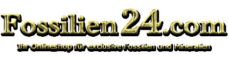 Fossilien24.com